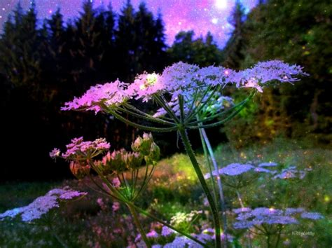 magical flower garden magical garden flowers nature background
