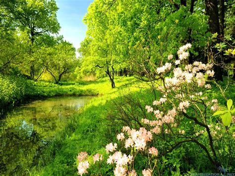 Beauty green nature wallpaper siudy net