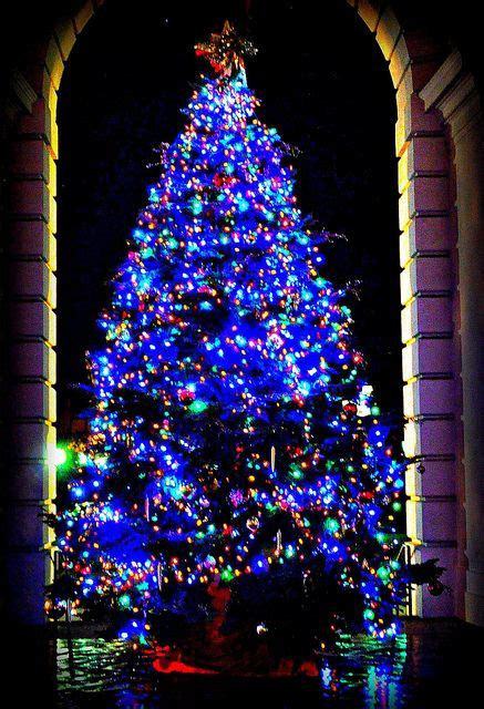 california christmas trees and trees on pinterest