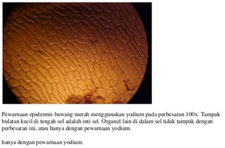 Pengantar Anatomi Tumbuh Tumbuhan Tentang Sel laporan praktikum biologi mengenal struktur sel hewan dan