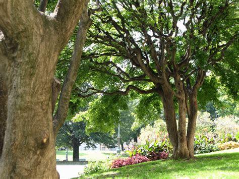 giardini cavour torino citt 224 di torino verde pubblico