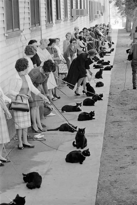 black cat call los angeles 1961 cats