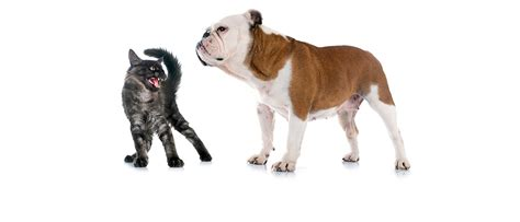 dogs vs dogs 2 how feline agility in business leads to term growth