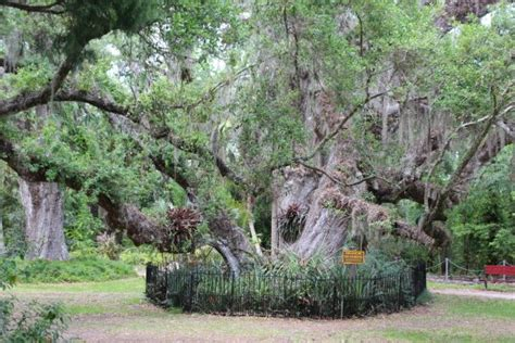 sugar mill botanical gardens gardens picture of dunlawton sugar mill gardens port orange tripadvisor
