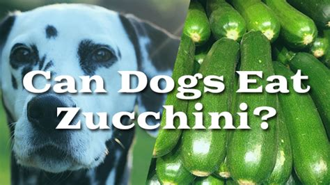 can dogs eat zucchini can dogs eat zucchini pet consider