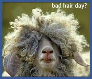 Bad Hair Day Bad Hair Day Quotes Quotesgram