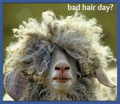 bad hair days a bad hair day funny quotes quotesgram