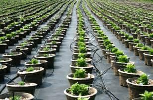 plant preference savatree