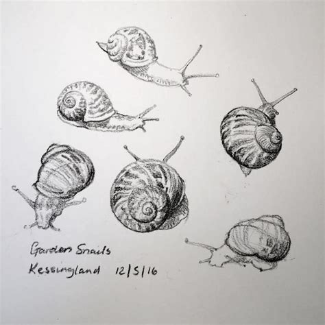 Goggle Snail Mx 18 Hijau snails sketch 133 kate batchelor suffolk artist tatuajes