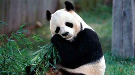 imagenes animales hd 1080p wallpapers animales hd 1080p taringa