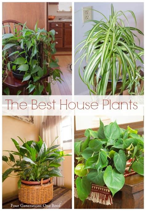 common house plants uk common house plants my plants common house plants plants and house