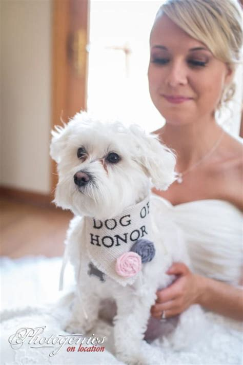 Wedding Accessories For Dogs by Bandana Of Honor Wedding Collar Flowers
