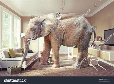 elephant living room big elephant case beer living room stock photo 412221721 shutterstock