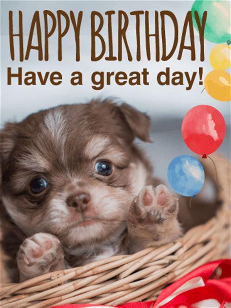 birthday puppy much animal happy birthday card birthday greeting cards by davia