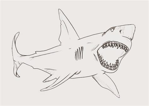 Bull Shark Coloring Pages bull shark coloring page free coloring pages and
