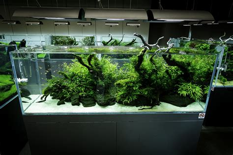 Aquascaping Shop by Ada Nature Aquarium Gallery Beautiful Moments Of The Galle Flickr