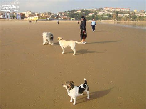 casas rurales en cantabria que admiten perros playas de cantabria que admiten perros playas pet