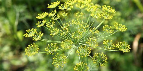 fiore commestibile fiori commestibili quali sono e come usarli di