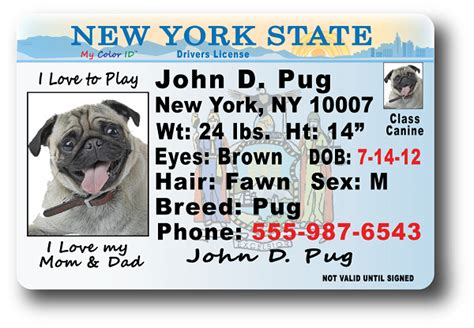 license nyc new york drivers license