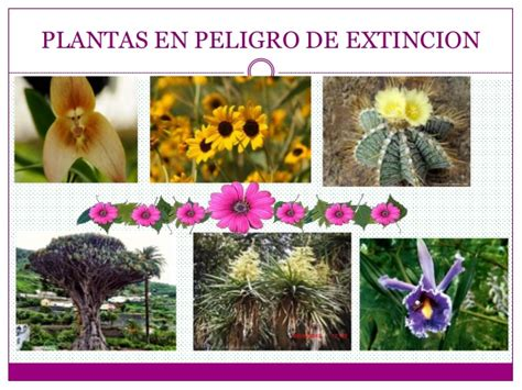 imagenes animales y plantas en peligro de extincion andrea silva animales y planas silvestres