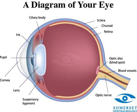 eyeball diagram eye diagram related keywords eye diagram