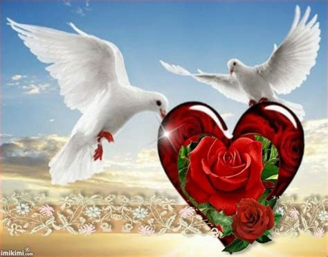 rest  peace sweet brother roses   brother love  dove images love frames