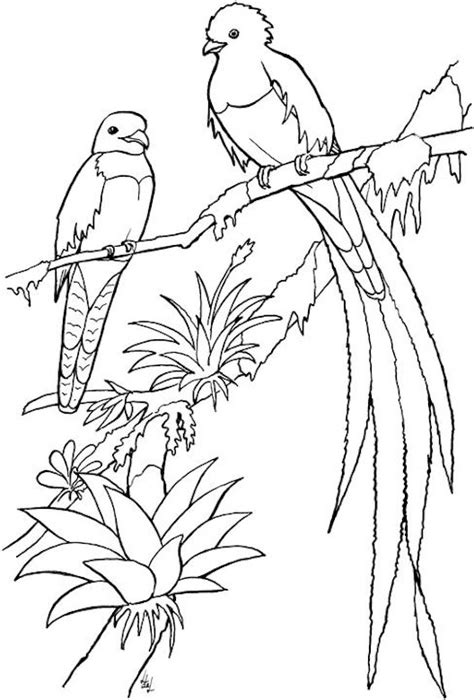coloring pages adults birds we create best plan free landscaping designs vans coupons