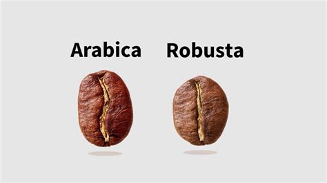 Coffee Robusta arabica robusta
