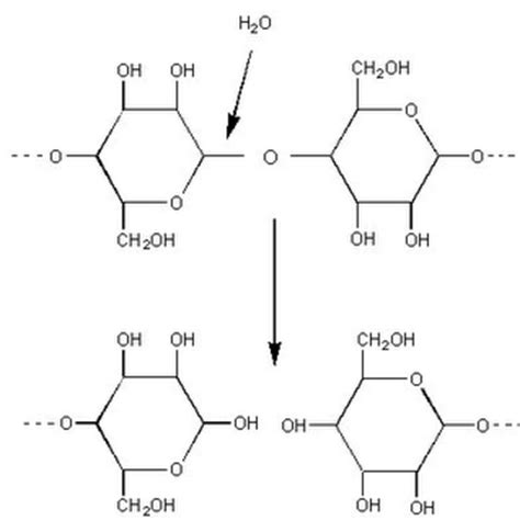 draw diagrams to illustrate condensation and hydrolysis reactions biochemical reactions and enzymes sbi 4u website