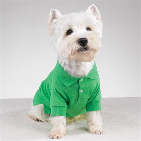 preppy puppy preppy puppy polo hton green with same day shipping baxterboo