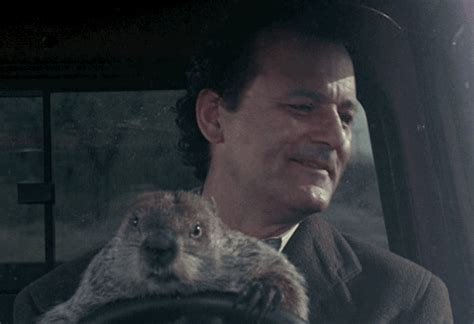 groundhog day giphy bill murray gif find on giphy