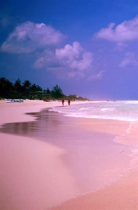 beaches with pink sand pink sand beach harbour island bahamas looks even more