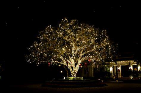 royal oak tree lighting randy s lighting 187 pricing