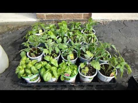 home depot sale  bonnie vegetable plants  plants