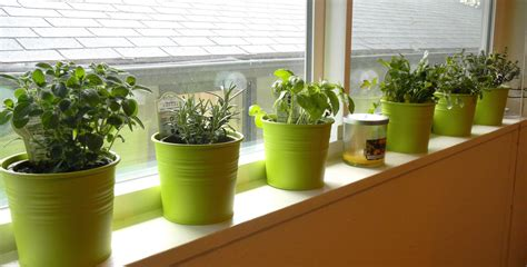 Indoor Windowsill Herb Garden by Cornwall Capers Windowsill Herbs