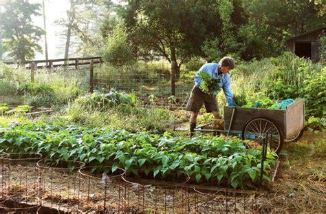 No Till Gardening Vegetable Garden No Till Gardening Joe Gardener 174