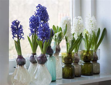 effortless indoor hyacinths florissa flowers roses