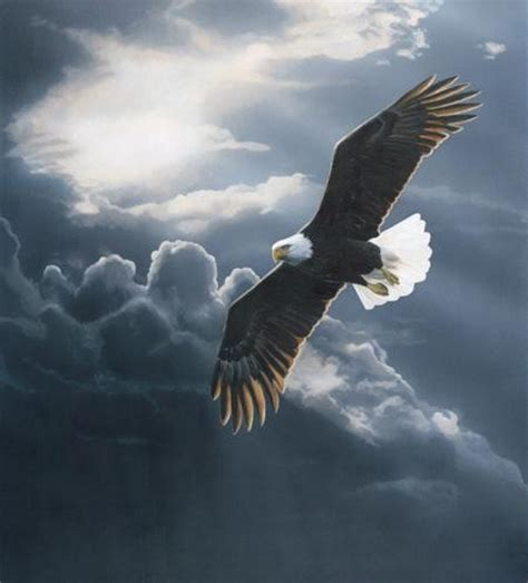 flying with one wing god s grace in our times of adversity books aigle