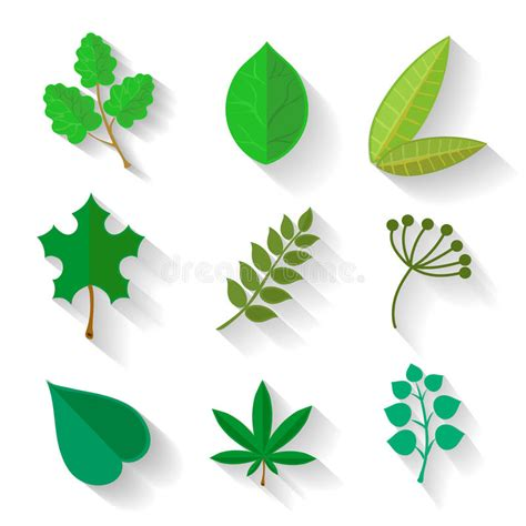 Leave Set set of leaves various trees isolated green leave stock