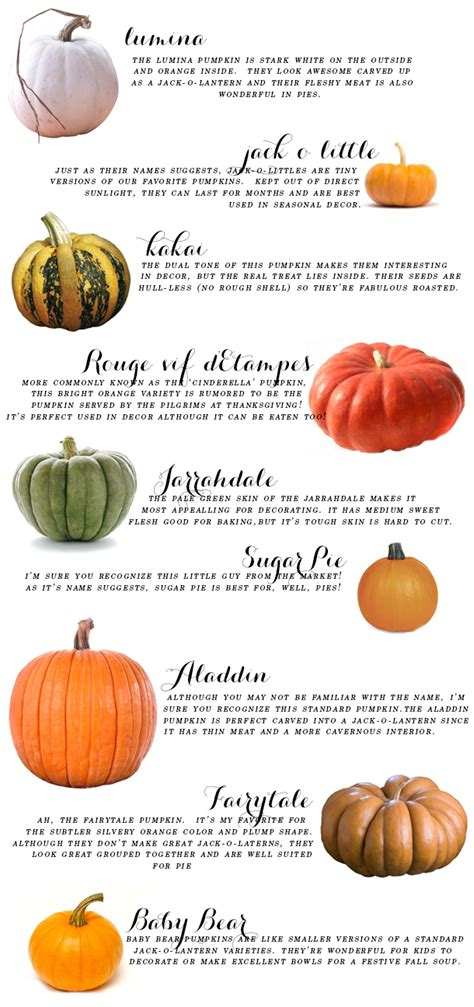 pumpkin names your ultimate fall pumpkin guide earnest home co
