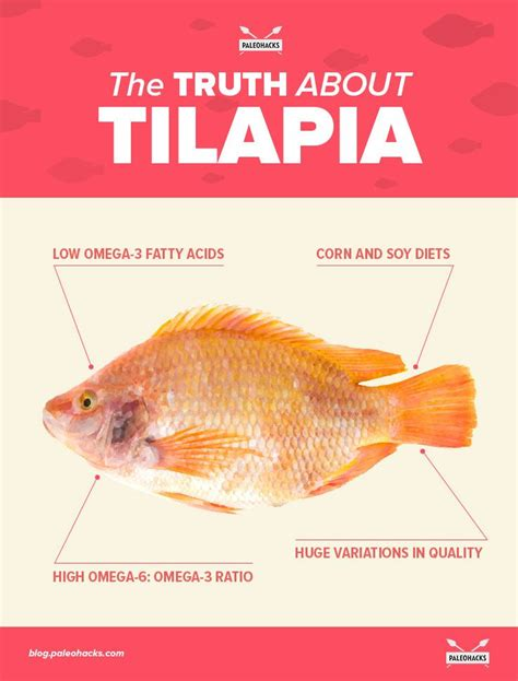 the truth about premium wordpress themes dear blogger the truth about tilapia