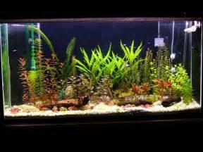 aquarium plants real  artificial