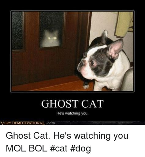 ghost meme 25 best memes about ghost cat ghost cat memes