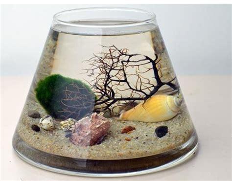 Medium Japanese Mossball 1000 images about terrarium marimo aquarium on