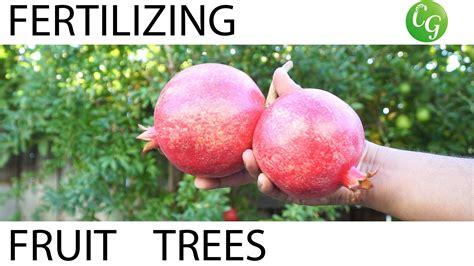 fertilizing fruit trees how to fertilize fruit trees fertilizing schedule