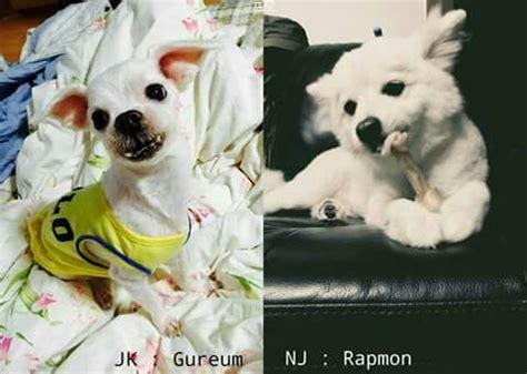 kim namjoon dog bts pet dogs army s amino