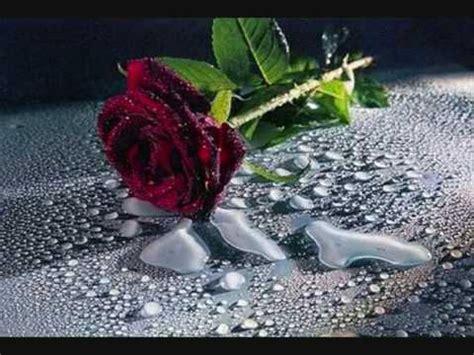 imagenes de rosas con espinas subway to sally die rosen im wasser lyrics youtube