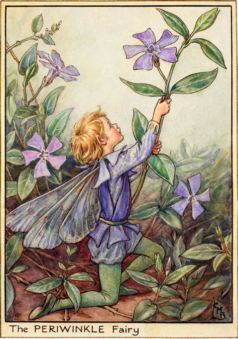 Flower Fairies Of The Garden The Periwinkle Flower Fairies