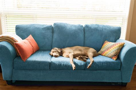 smelly couch noseblind to your home s odors remove musty smells
