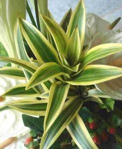 come curare le piante da appartamento come curare le piante da appartamento garden